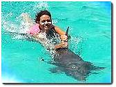 Swimming with the Dolfin